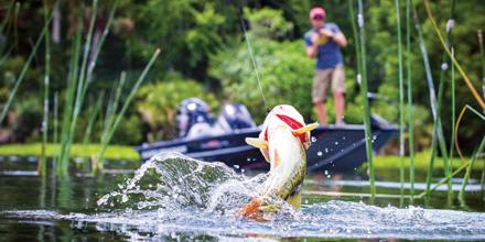 Bass Fishing on Lake Fork